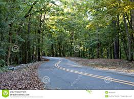 Paved Roadway Lined With Falled Leaves And Leads Through Lush Green