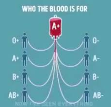 Blood Type Chart And Compatibility Gif Gfycat