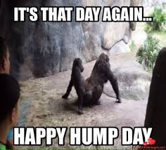 52319168 Happy Hump Day Greetings Of The Day