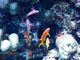 Real Underwater World Real Underwater World D Nongzico