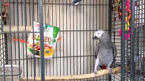 Toys for african grey parrots