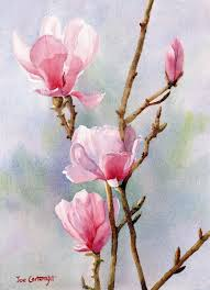pink magnolias watercolour painting by joe cartwright