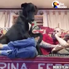 Weshalb Ich Hunde Liebe Lustige Bilder Sprüche Witze Echt Lustig