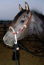 Image result for horse bridle images