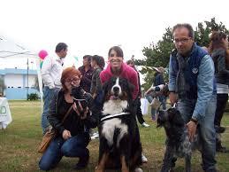Olbia u2013 dog fest: entusiasmo e professionalità al concorso per