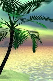 coconut tree hd pulse coconut tree
