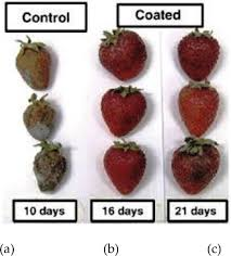 Fruit Physiology And Postharvest Management Of Strawberry