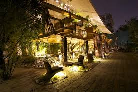 tree house jaipur. PrevNext Tree House Jaipur T