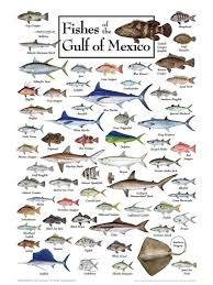 Free Fishing Charts Fishes Of The Gulf Jigsaw Puzzle By Heritage Puzzle On