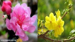 "Bài thơ "" Hoa đào hoa mai"""