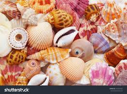 sea shells collection colorful seashells background sea shells collection stock photo