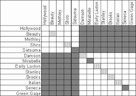 Japanese Plum Pollination Chart Hartmans Nursery Fruit Info Western Cascade Fruit Society