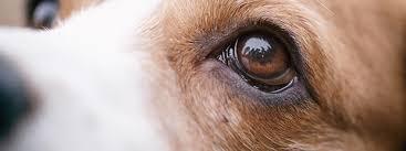 the world through a dog s eyes mypet
