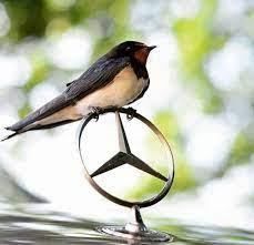 Free bird #mercedes | Mercedes benz logo, Mercedes, Benz