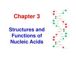 Functions Of Nucleic Acids Ppt Chapter 3 Structures And Functions Of Nucleic Acids