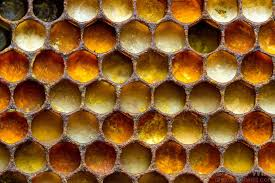 Queen Bee Colour Chart The Various Colors Of Pollen In A Honey Bee Nest Indicate