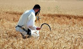Image result for harvest israel images