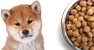 Shiba Inu Growth Chart Feeding A Shiba Inu Puppy When To Feed What To Feed And