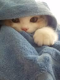 Kucing Lucu Tumblr Uploaded By Sella Ashin Elf