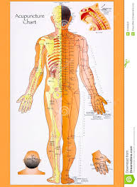 Acupuncture Wall Charts Download Traditional Chinese Acupuncture Chart Editorial Stock Image