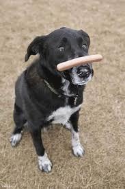 moving picture dog flips hot dog on nose animated gif