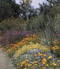california native plants for the garden. the california natives in this mixed border at leaning pine arboretum, cal poly, native plants for garden