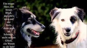 32 Schöne Hundesprüche Zitate Teil 1 Youtube