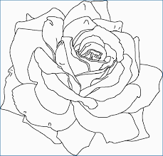 Coloring Pages For Adults Of Flowers 31 Most Wanted Models You