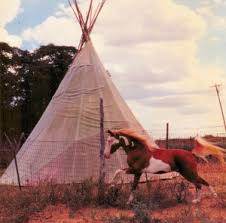 Indian War Horse Paint Chart American Indian Horse History Aihr