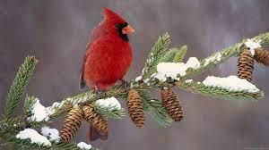 Winter Bird Wallpapers - Top Free ...