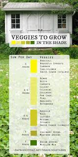 Vegetable Sunlight Requirement Chart 25 Vegetables You Can Grow In Shade Empress Of Dirt