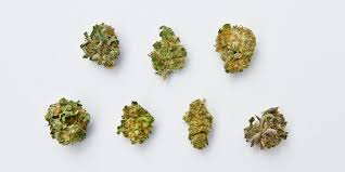 Indica Sativa Hybrid Chart How To Buy Cannabis The Differences Between Sativa Indica