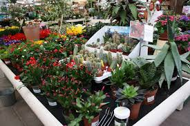 see a larger image by ing on any of the thumbnails on this page or take a look at our latest special offers on plants