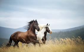 馬の並走の動物壁紙
