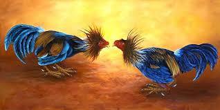 លទ្ធផលរូបភាពសម្រាប់ rooster fighting picture