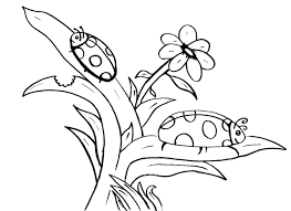 Small Picture Ladybug Coloring Sheet Bebo Pandco