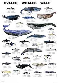 Accessories Marine Life Charts From Scandinavian Fishing
