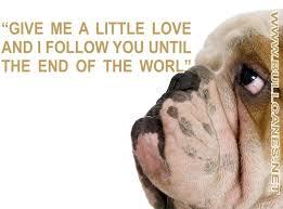 Image result for english bulldog