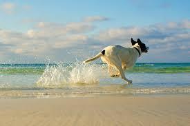 Vuoi portare il cane a mare? Ecco tutte le info
