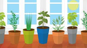 Indoor Kitchen Gardening 5 Kitchen Herbs For Small Garden Spaces Fixcom