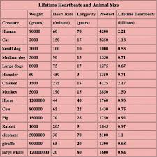 Heart Beat Chart Lifetime Heartbeats For Every Living Creature Average Up To