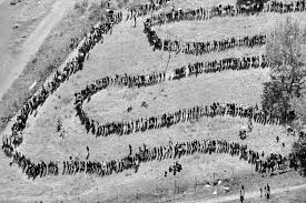 The Day Apartheid Died Photos Of South Africas First Free Vote