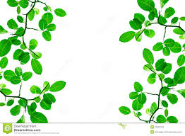 Green Leafs Border Design Stock Photo Image Of Lush 26422102
