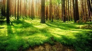 Resultado de imagen para bosques