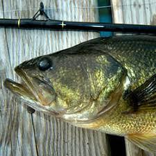 Fishing Lake Eugenia Ontario Bass Fishing