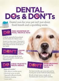 Dog Teeth Health Chart Dental Exams For Pets Animal Hospital Aurora Colorado