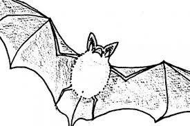 Bat Walk | Midlothian Science Festival