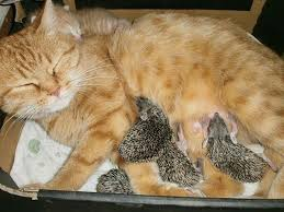 dogs and cats having babies.  Cats Our Lovely Hairy Friends Definitely Have Family Values And Some  Partnerships Can Be Even More Surprising A Hundred Years Old Tortoise Adopted A Baby Hippo  In Dogs And Cats Having Babies D