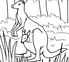 Kangaroo Coloring Pages Printable Picture Pictures Kitchen Sink