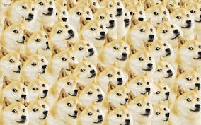 doge wallpaper hd. Wonderful Wallpaper 1920x1200 Doge Wallpapers 49 HD WallpapersBackgrounds NMgnCP PC  Gallery For Wallpaper Hd 2